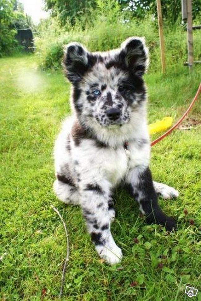 Cachorro-Pelagem-Diferente-2