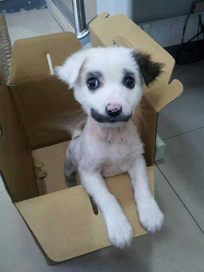 Cachorro-Pelagem-Diferente-20