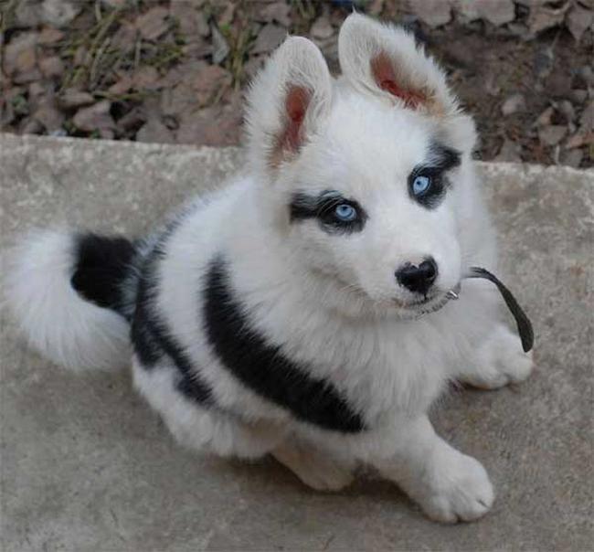 Cachorro-Pelagem-Diferente-3