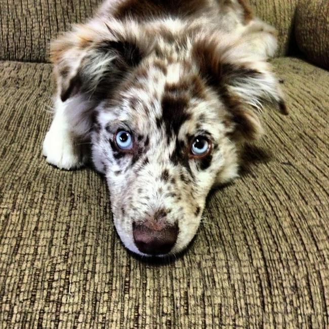 Cachorro-Pelagem-Diferente-7