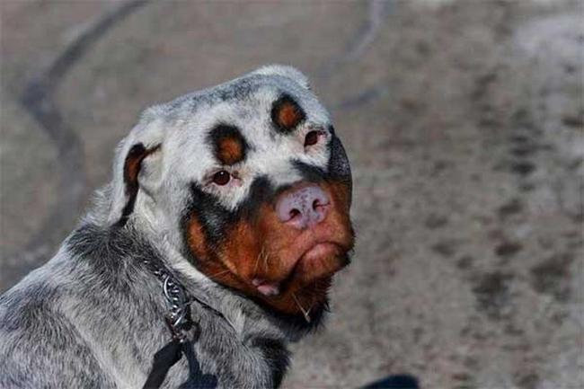 Cachorro-Pelagem-Diferente-8