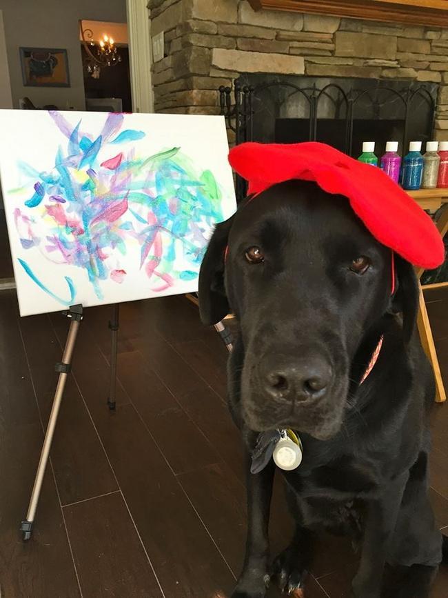 Cachorro-Pintor-5