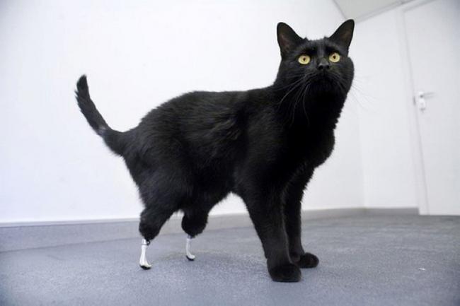 Proteses-Animais-7