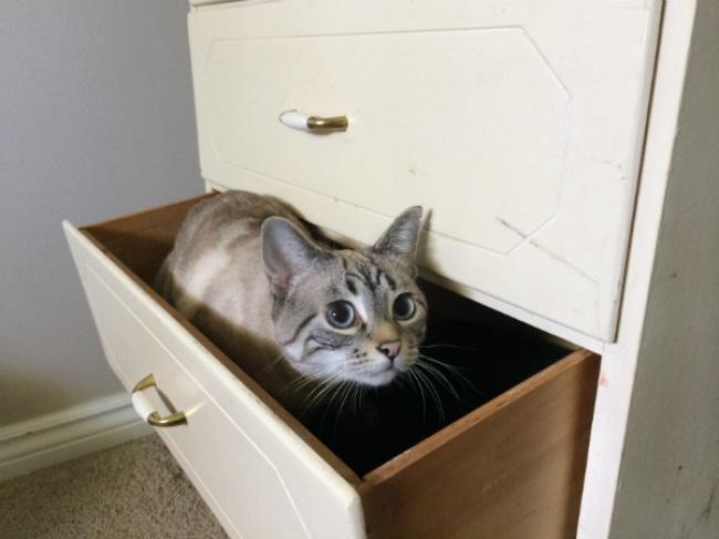 achar-gato-1