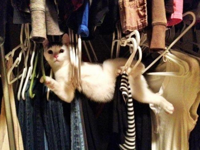 achar-gato-11