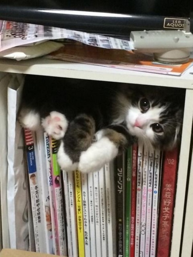 achar-gato-13