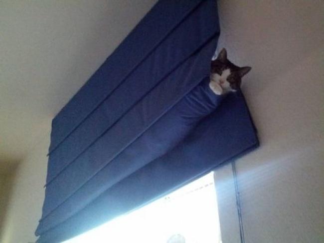 achar-gato-14