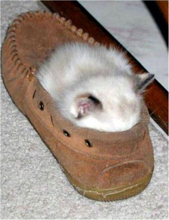 achar-gato-4