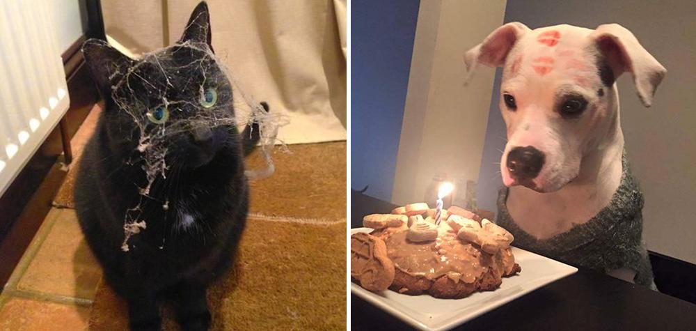 19 Imagens provando que os animais são as melhores pessoas