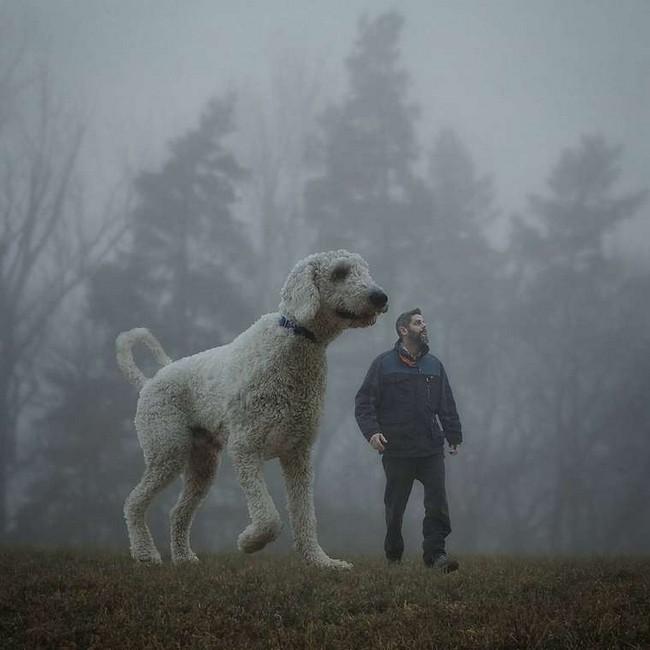 cachorro-gigante-10