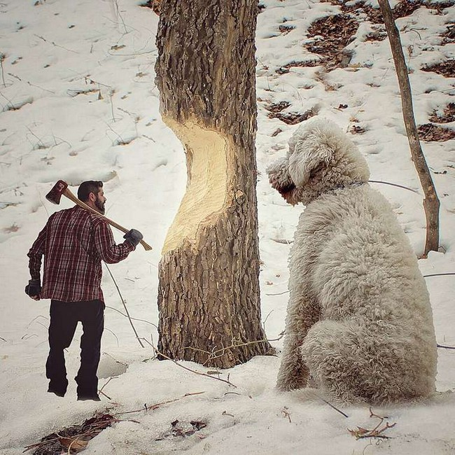 cachorro-gigante-11