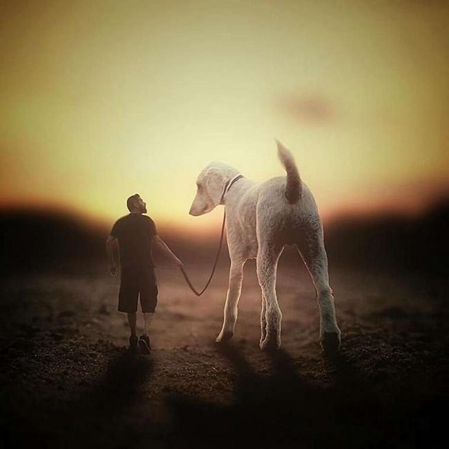 cachorro-gigante-12