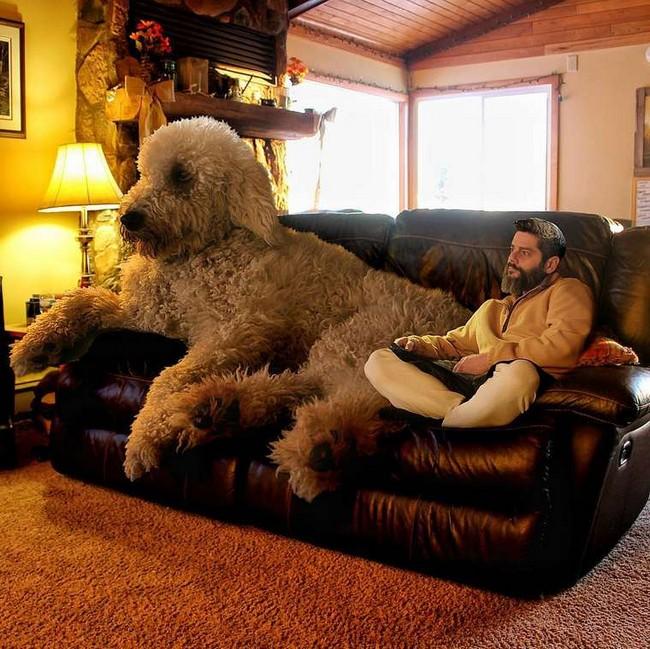 cachorro-gigante-13