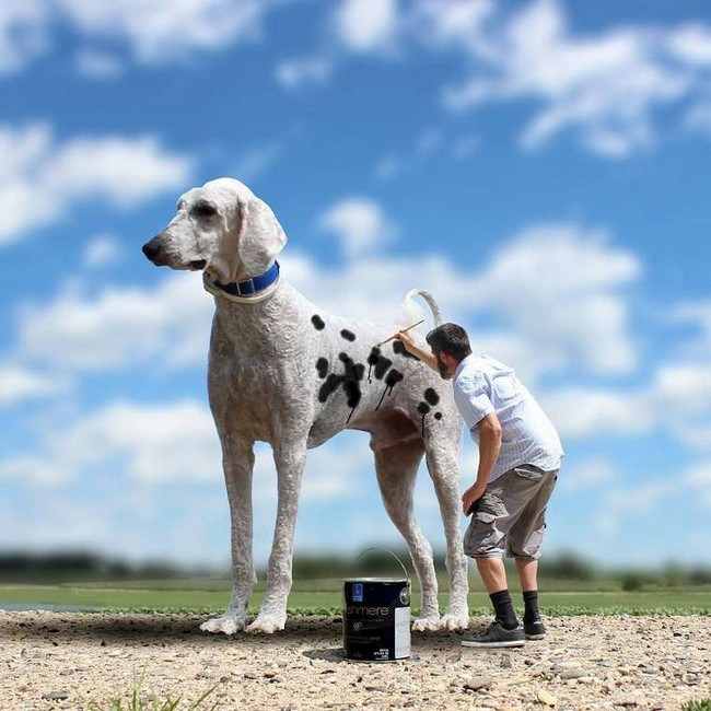 cachorro-gigante-14