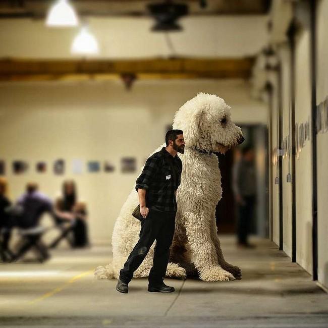 cachorro-gigante-15