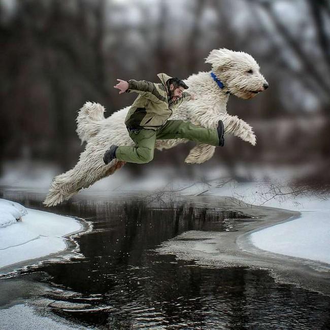 cachorro-gigante-17