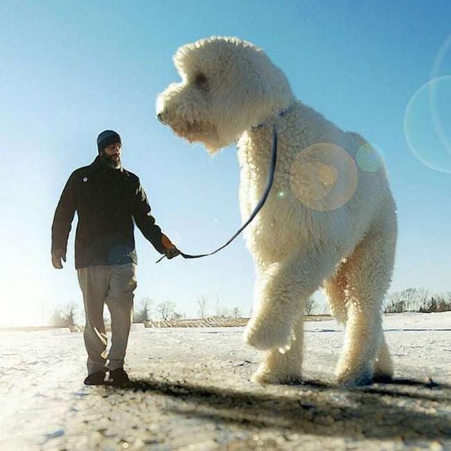 cachorro-gigante-18