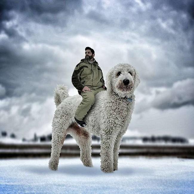 cachorro-gigante-19