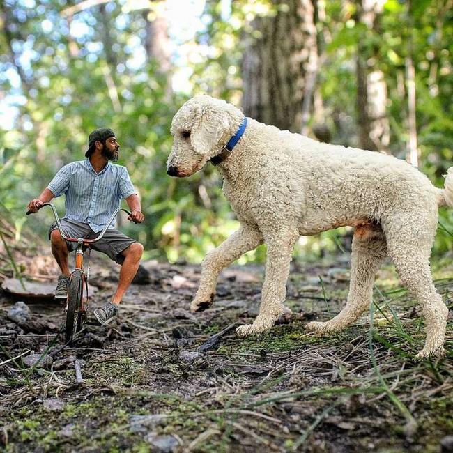 cachorro-gigante-20