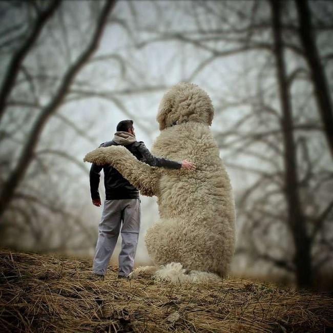 cachorro-gigante-21