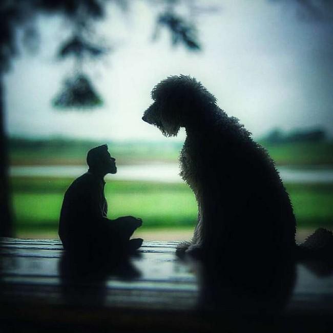 cachorro-gigante-22