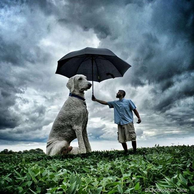 cachorro-gigante-23