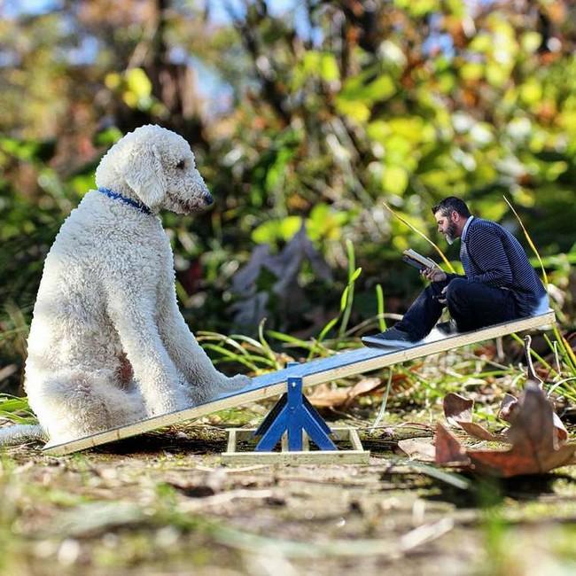 cachorro-gigante-24