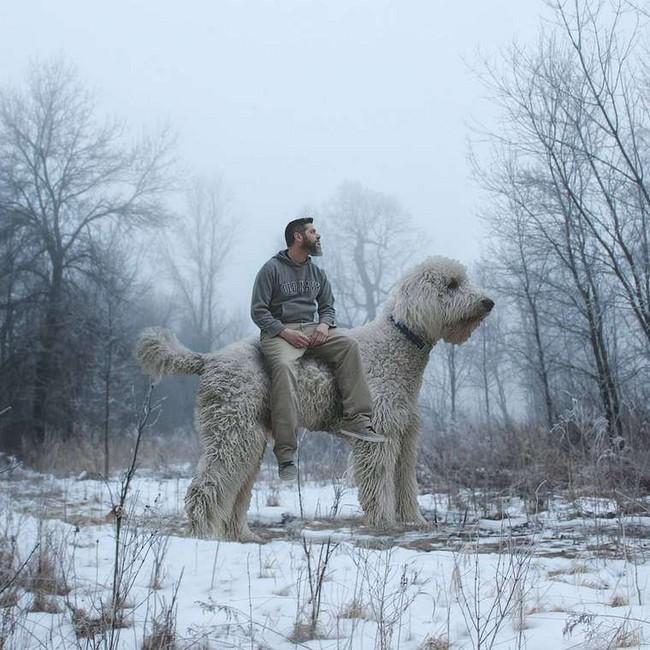 cachorro-gigante-3