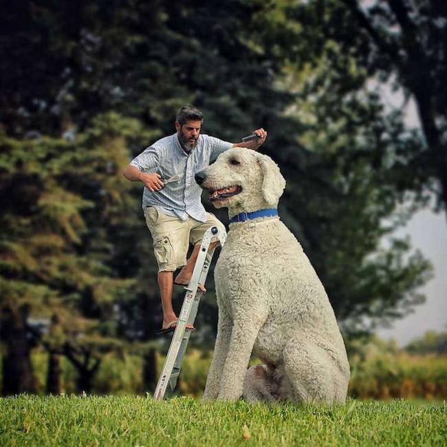 cachorro-gigante-4