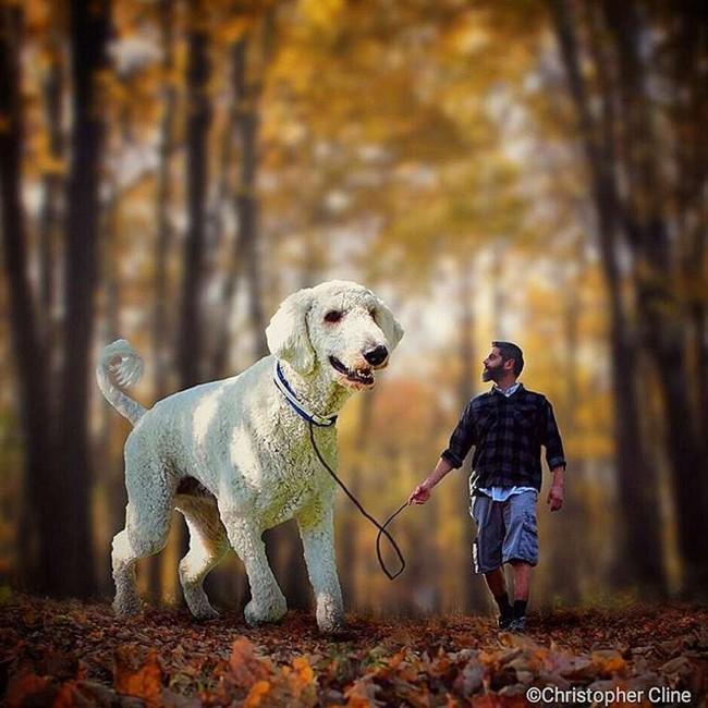 cachorro-gigante-5