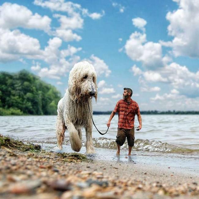 cachorro-gigante-6