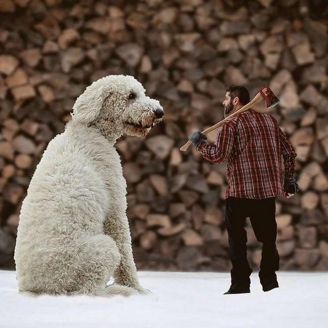cachorro-gigante-7