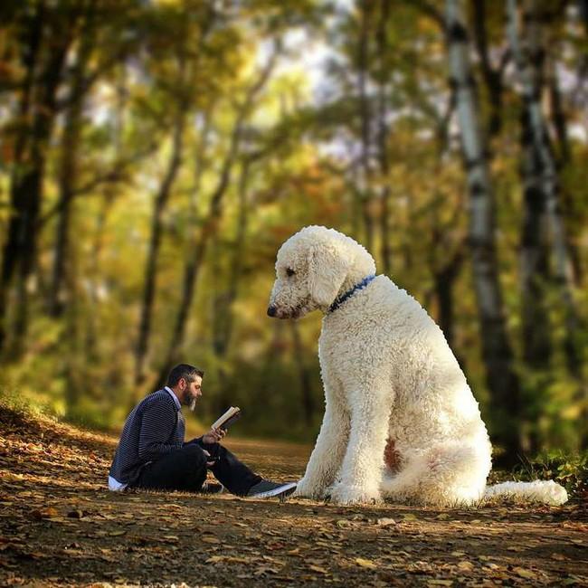 cachorro-gigante-8