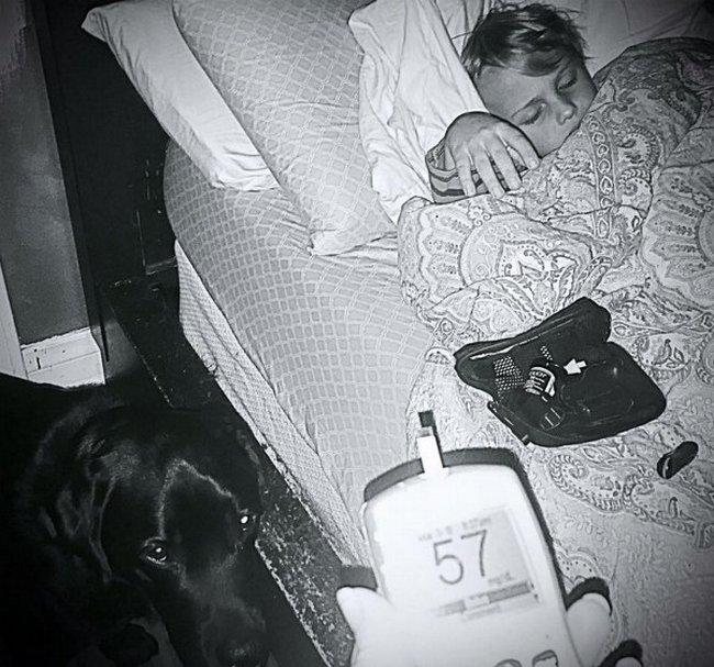 cachorro-salva-garoto-1