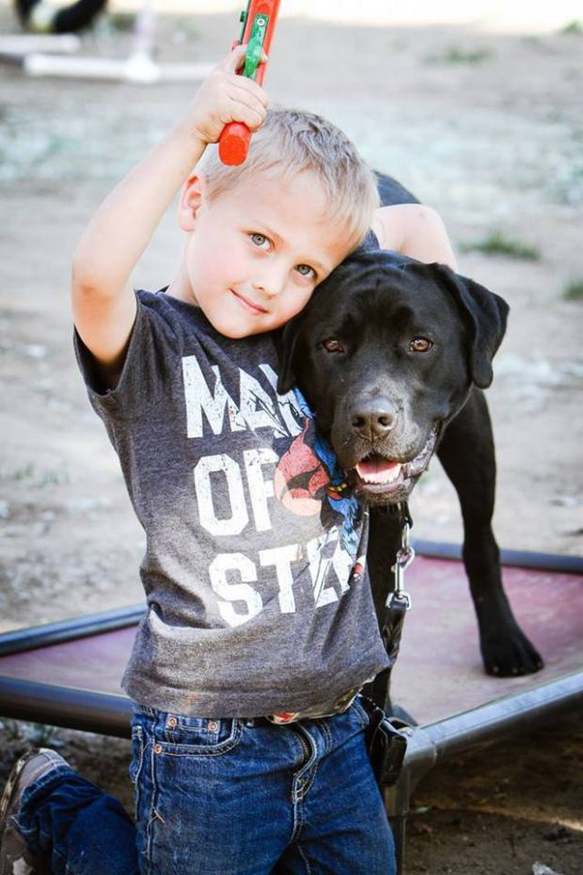 cachorro-salva-garoto-4