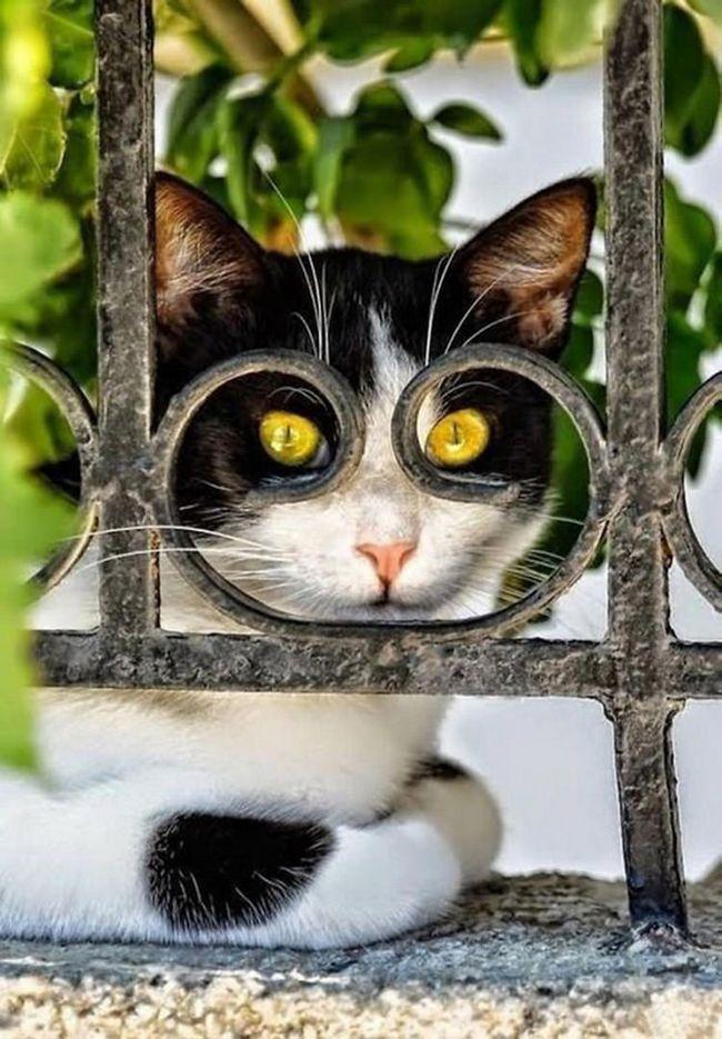 fotos-gatos-timing-perfeito-11