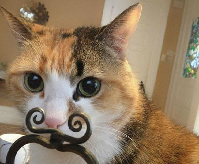 fotos-gatos-timing-perfeito-12