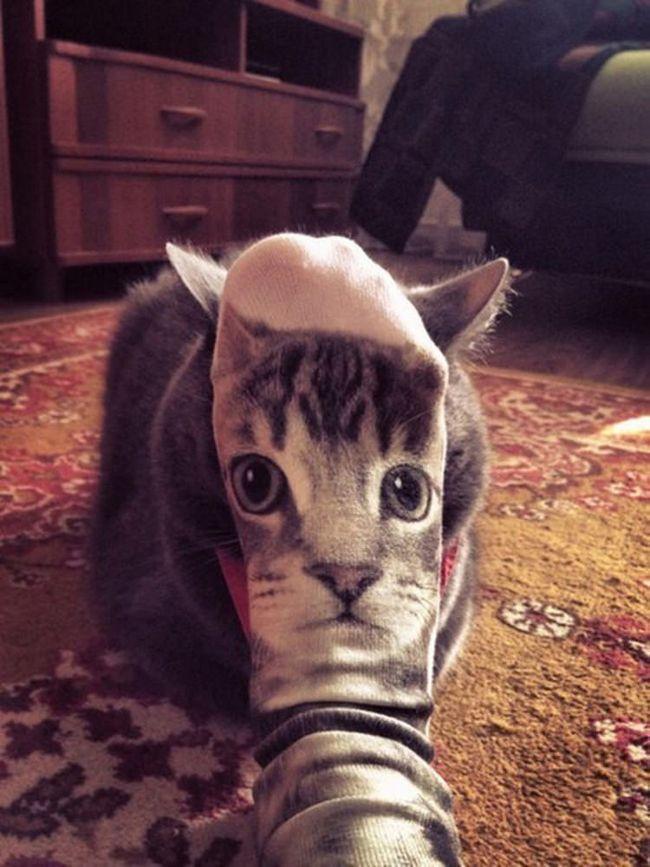 fotos-gatos-timing-perfeito-13