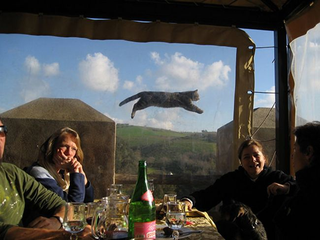 fotos-gatos-timing-perfeito-2