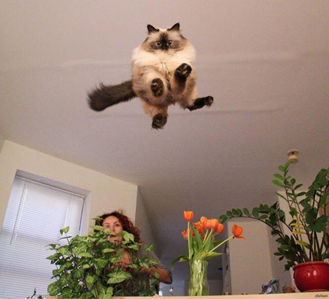 fotos-gatos-timing-perfeito-3