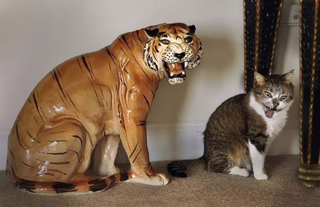 fotos-gatos-timing-perfeito-4