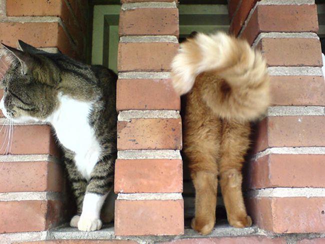 fotos-gatos-timing-perfeito-5