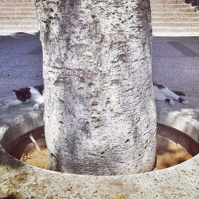 fotos-gatos-timing-perfeito-6