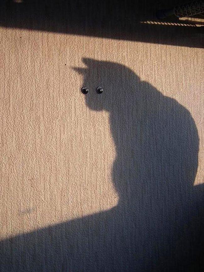 fotos-gatos-timing-perfeito-7
