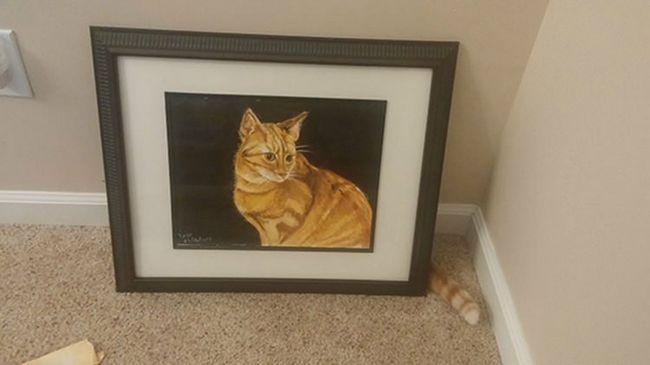 fotos-gatos-timing-perfeito-8