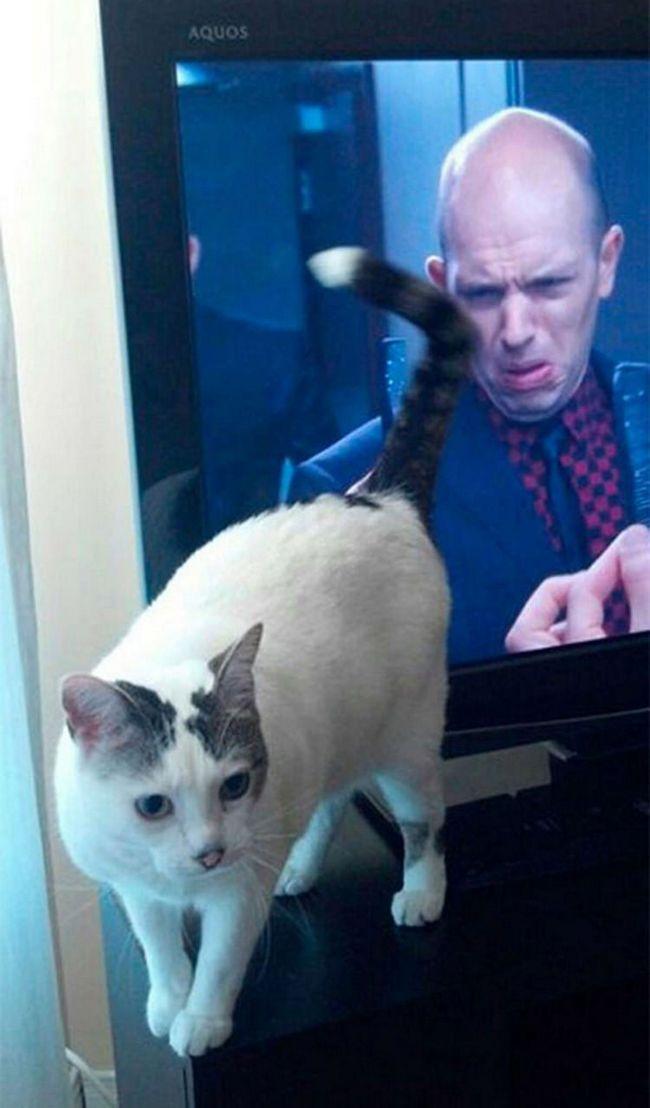 fotos-gatos-timing-perfeito-x