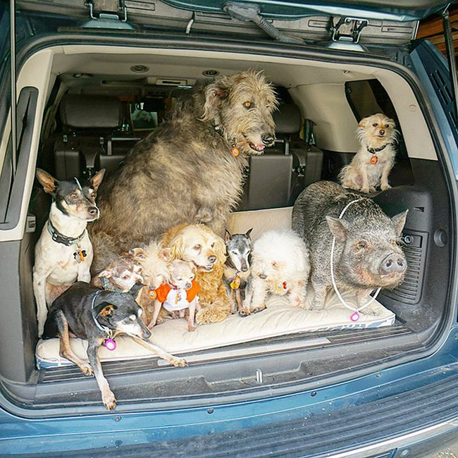 homem-adota-cachorros-idosos-4