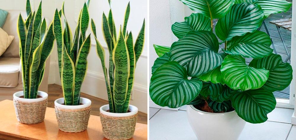 12 lindas plantas que podem sobreviver at em ambientes - Plantas grandes para interiores ...