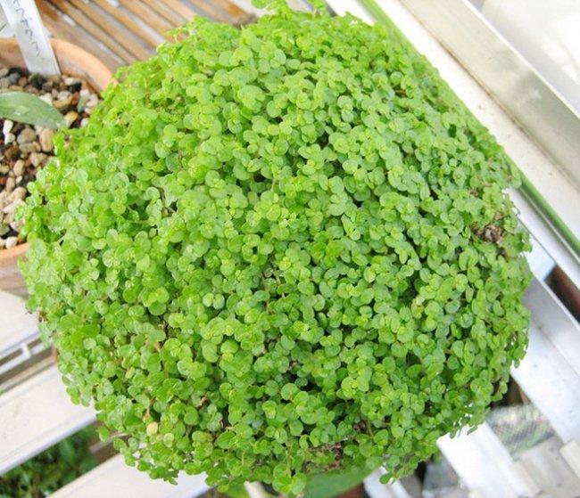 12 lindas plantas que podem sobreviver at em ambientes for Plantas bonitas de interior