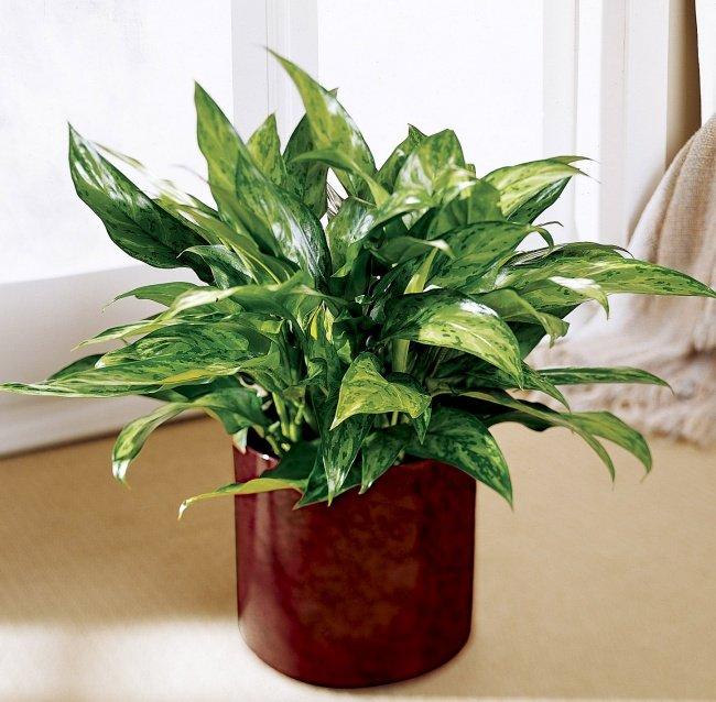 plantas-que-podem-sobreviver-ao-canto-mais-escuro-2